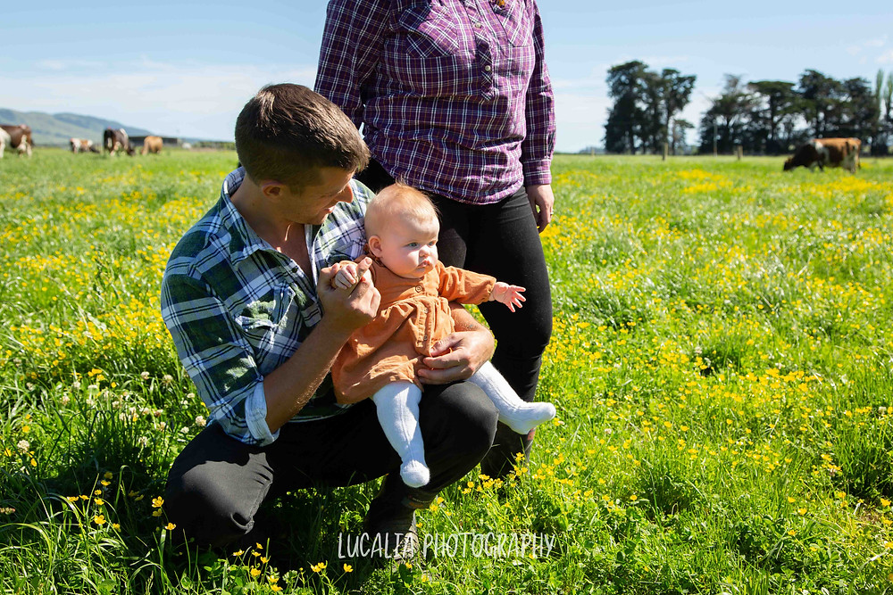 dad holding daughter with mum standing in a cow field, Wairarapa family photographer