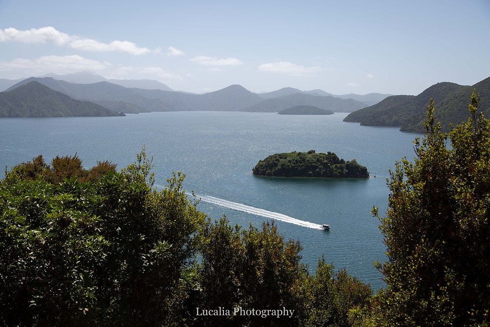 view from the top of a hill overlooking a bay with an island and boat, Wairarapa photographer