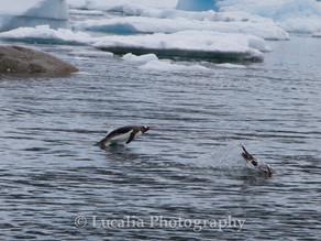 Travel Photography: Antarctica