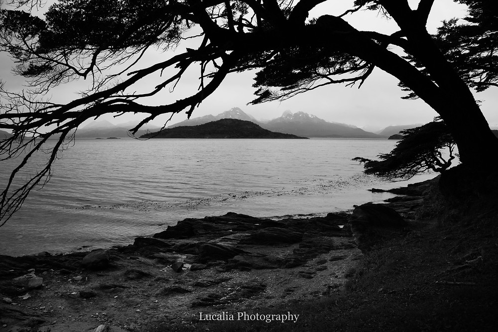 lake and overhanging southern beech tree, Tierra del Fuego National Park, Ushuia, Argentina