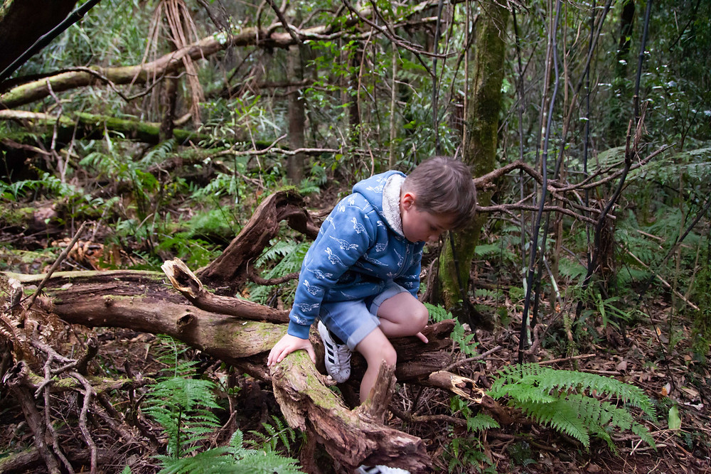 boy climbing on fallen tree, Waiohine Gorge, Wairarapa family photographer