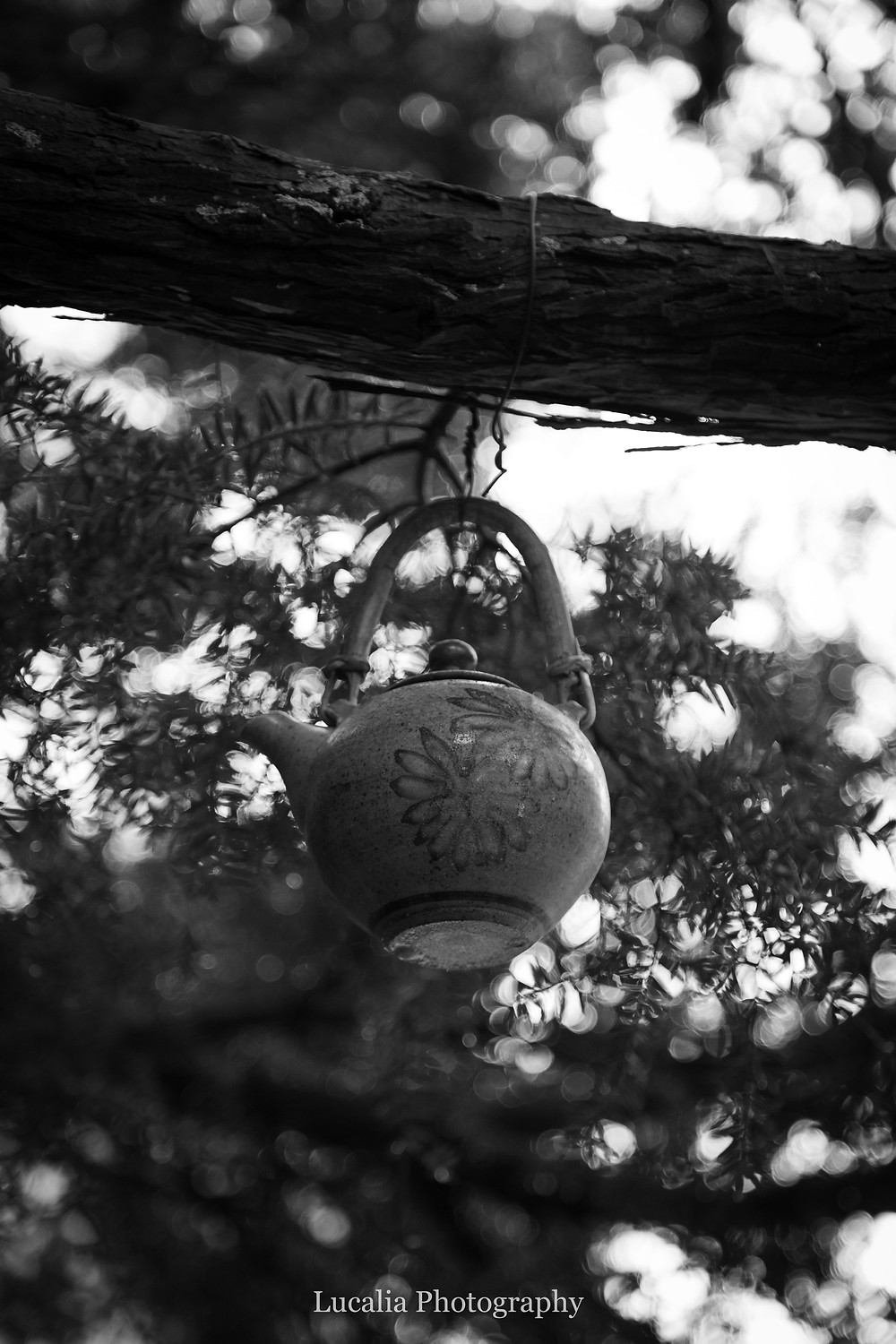 teapot decoration hanging from a tree, Wairarapa family photographer