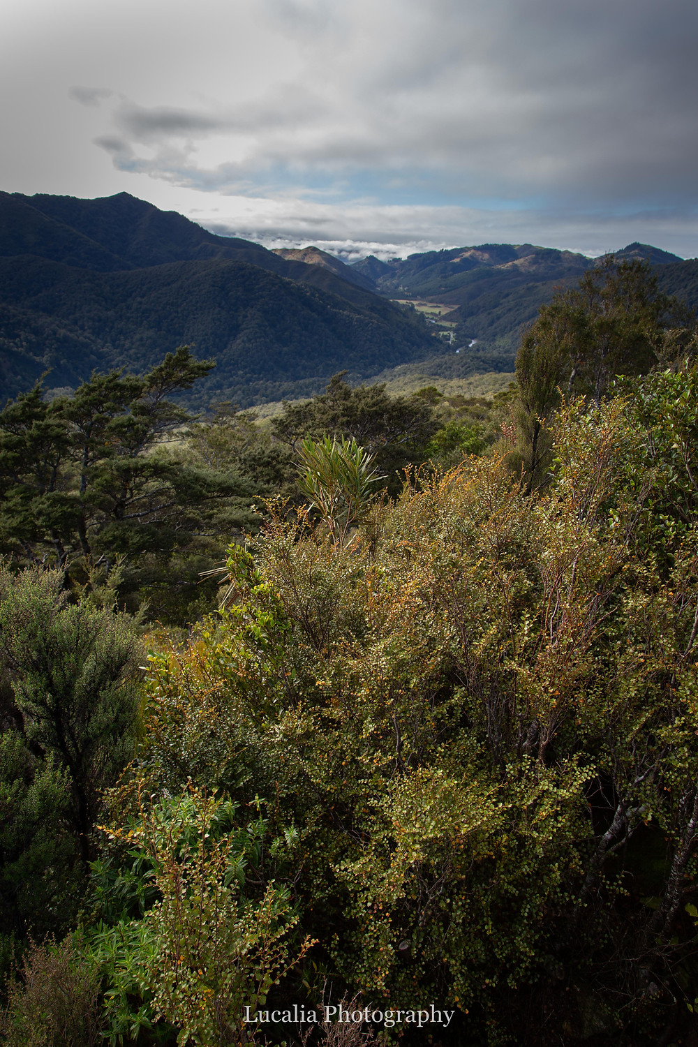 view from Rocky Lookout, Mt Holdsworth, Wairarapa, New Zealand