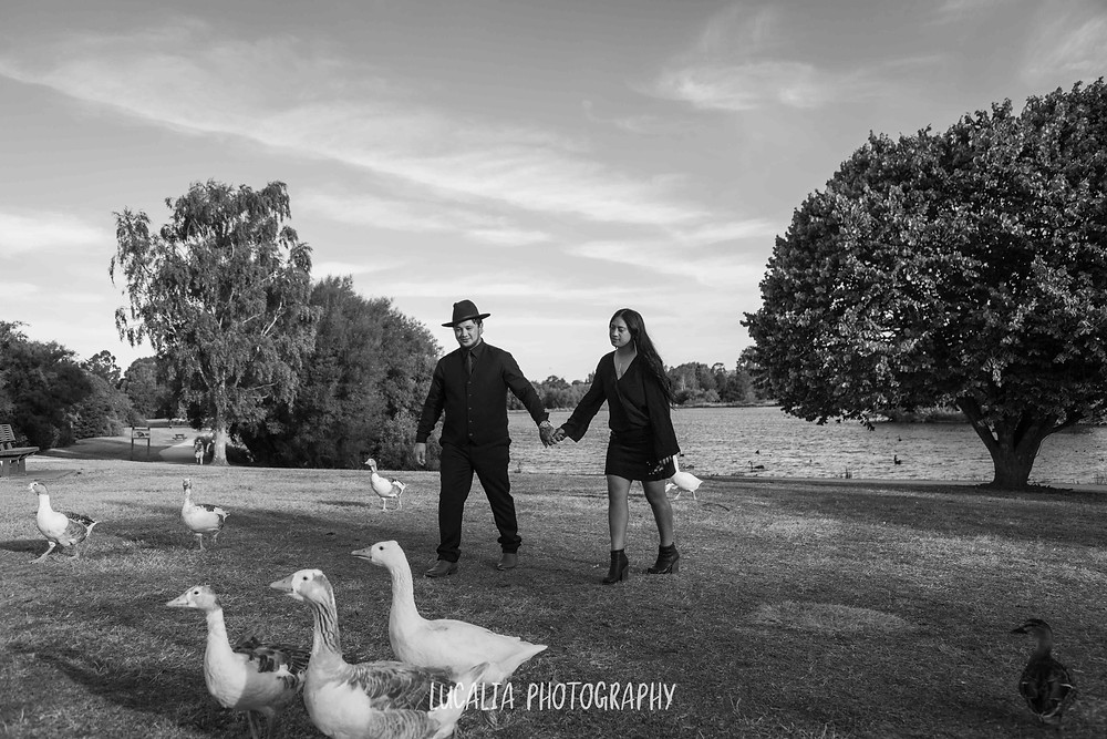couple walking with geese at Henley Lake, Wairarapa wedding photographer