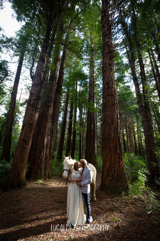 wedding couple kissing with white horse in a forest, Kiriwhakapapa Wairarapa wedding photographer