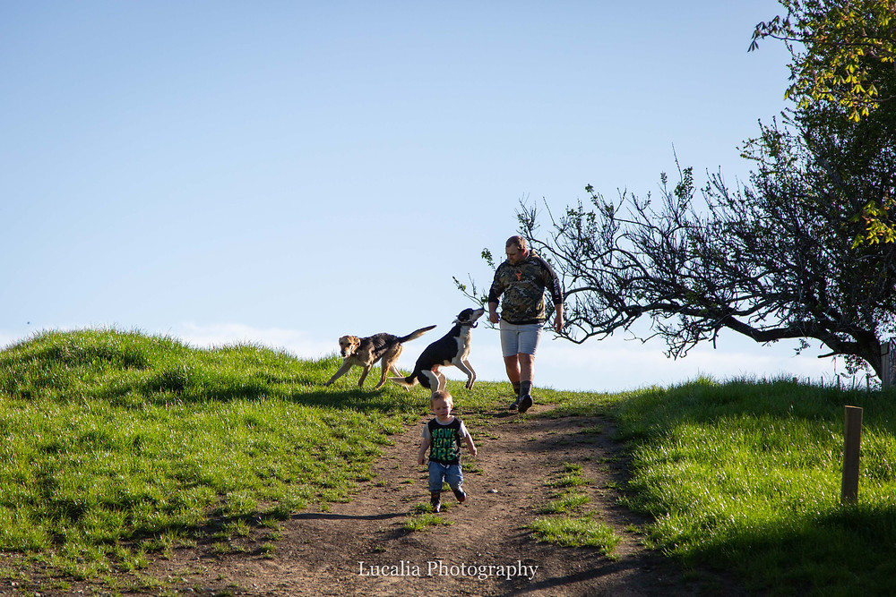 dad, dogs and son walk down a country road, Wairarapa family photographer