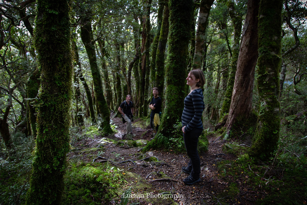 friends trekking mt holdsworth beech forest, Wairarapa New Zealand