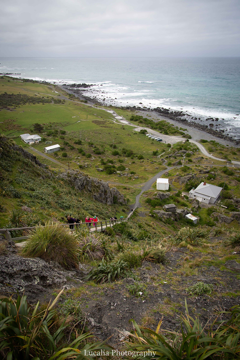 Climbing the 250 steps to Cape Palliser, Wairarapa, New Zealand