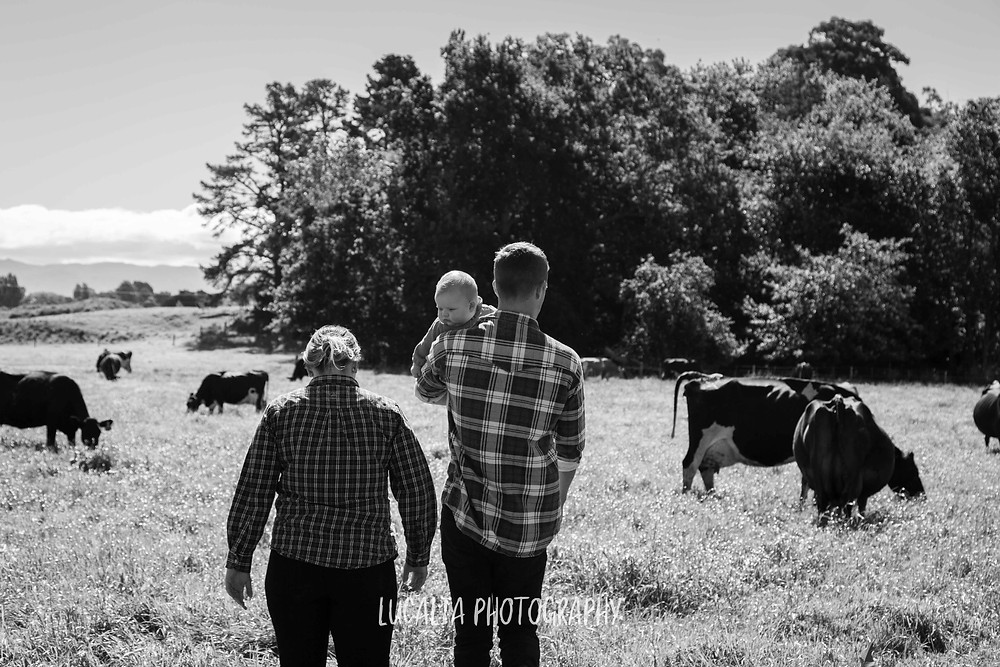 family with baby walking on a dairy farm, Wairarapa family photographer