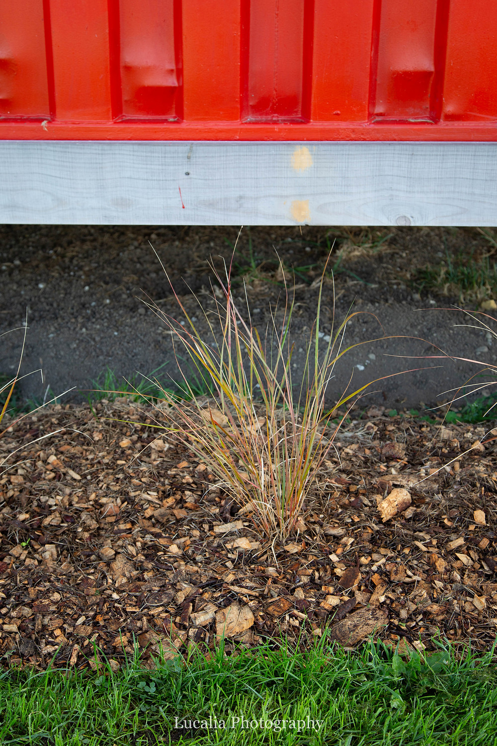 planting around the container home to hide underneath, Wairarapa