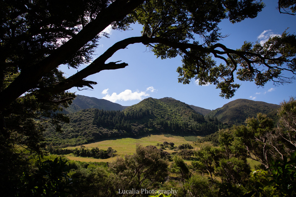 Mountains and fields through branches, Remutaka Incline, Wairarapa walk