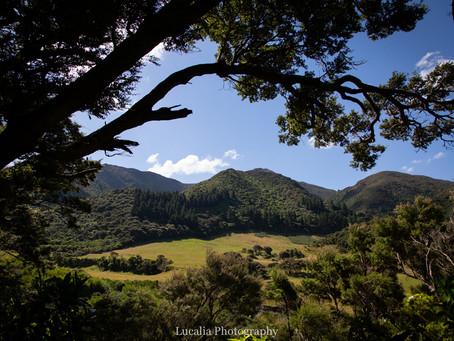 New Year's Day adventure tramp: Remutaka Incline, Wairarapa