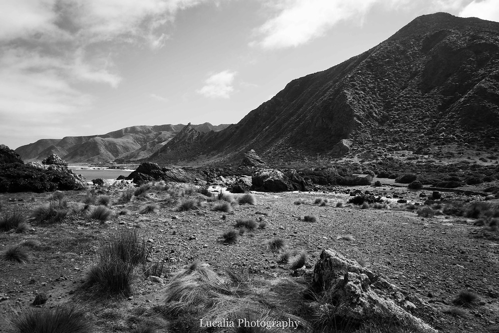 Black and white landscape at Palliser Bay, Wairarapa, New Zealand