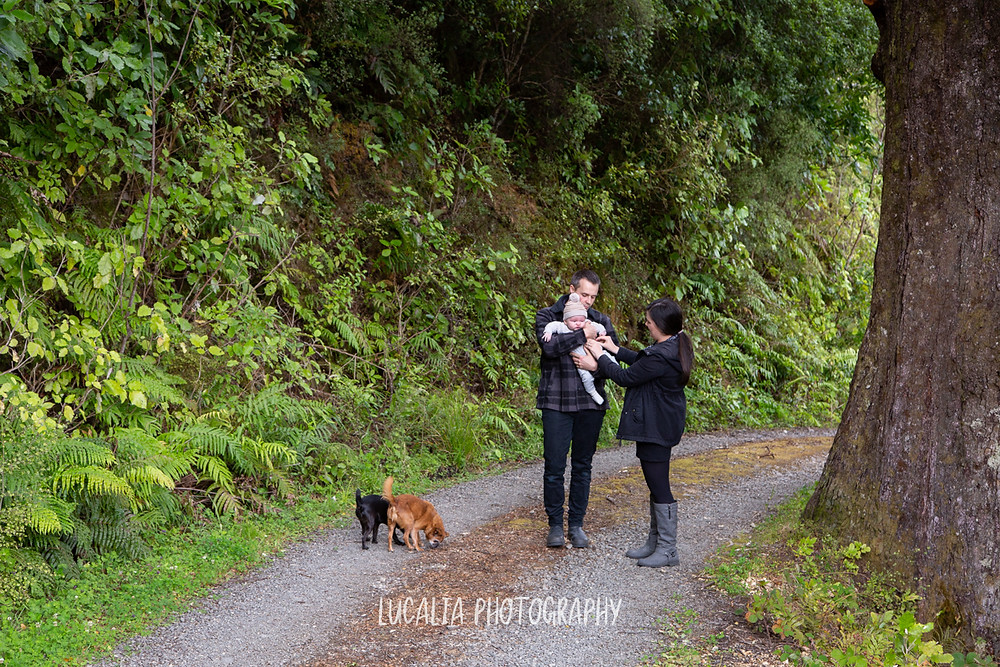family with two dogs on forest road, Mount Holdsworth, Wairarapa family photographer