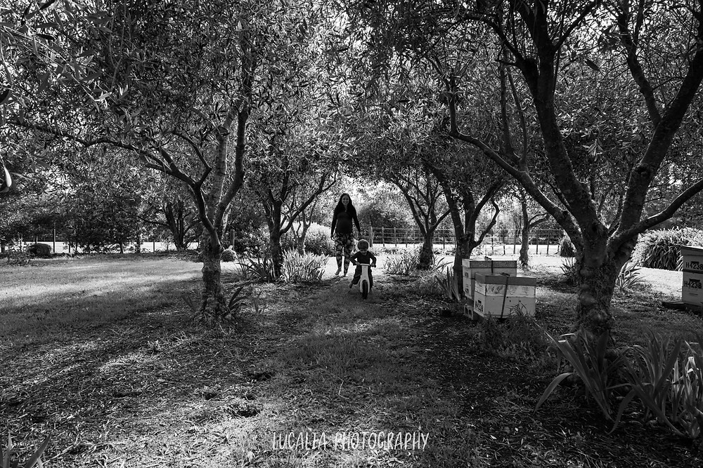 pregnant mum walking through olive grove with son on scooter, Wairarapa maternity photographer