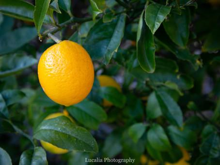 Wairarapa home grown goodness: Lemon Curd recipe