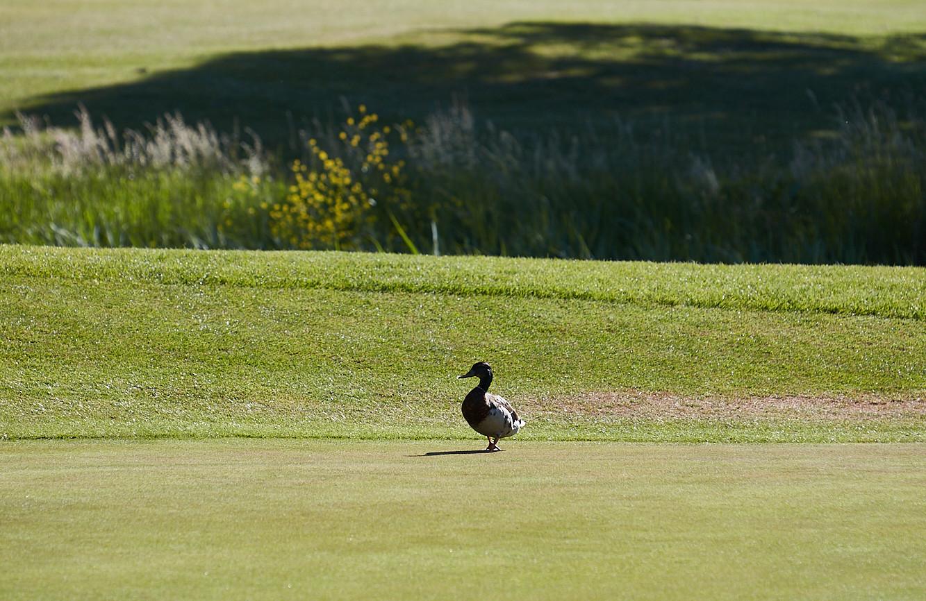 Peterstone Lakes Golf Club-020.jpg