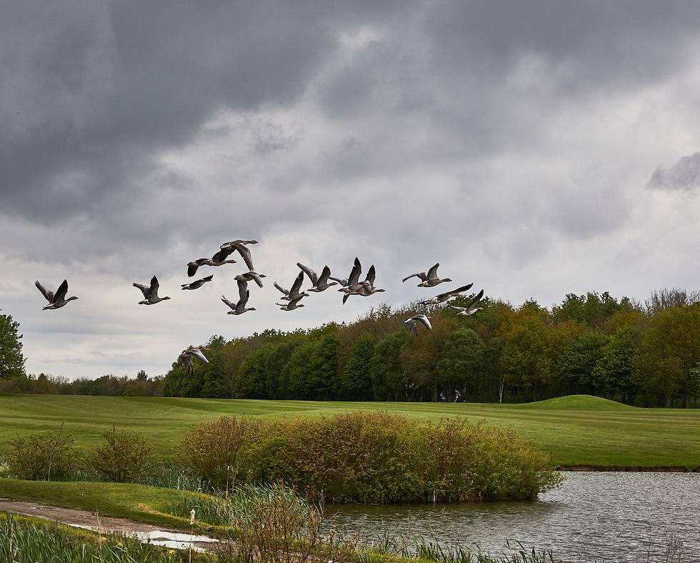 Golf Course -208.jpg