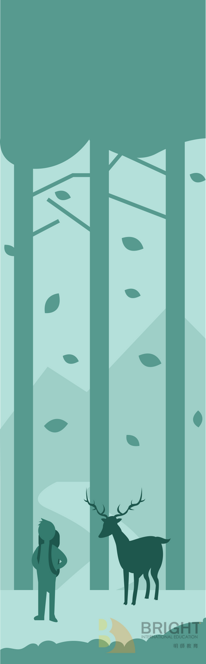 Brighter Illustration Forest