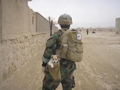 Nowzad: Saving Animal Victims of Human Wars