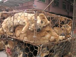 Stolen Pets Big Business in Korea:  Save Korean Dogs Fighting the Dog Meat Trade