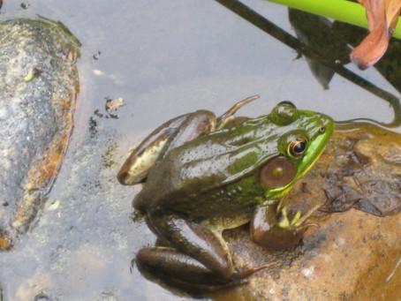 Backyard Wildlife Habitats Help Animals!