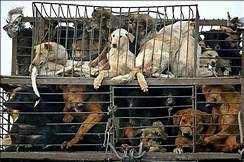 Animals Asia:  Tackling the Dog and Cat Meat Industry