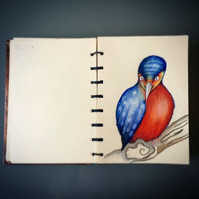 My sketchbook is filling up with lots of different birds at the moment, I think I will turn some int