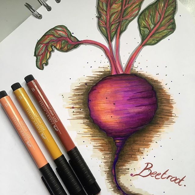 Beetroot #beetroot #fabarcastell #autumnillustration #autumnal #autumncolours #red #autumnvegetables