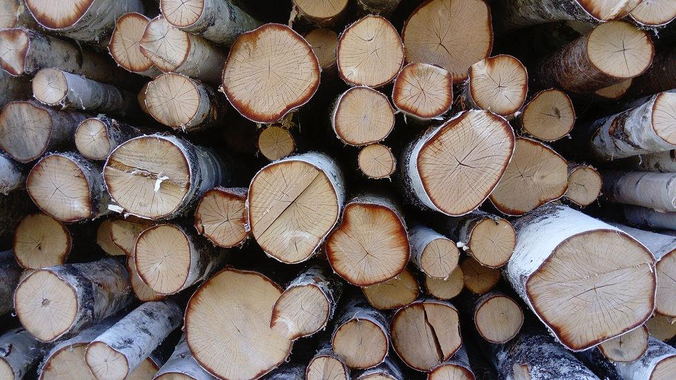 Birch logs Finland 1.jpg