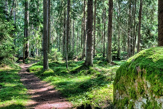 A footpath in a green magical forest lan