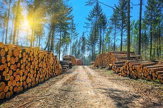 Log stacks along the forest road.jpg