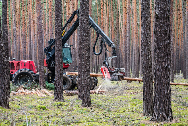 The forest harvester is working in a pin