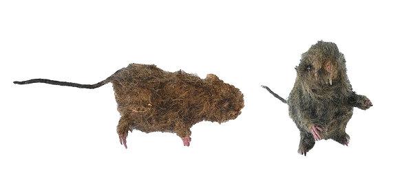 Ratas peludas