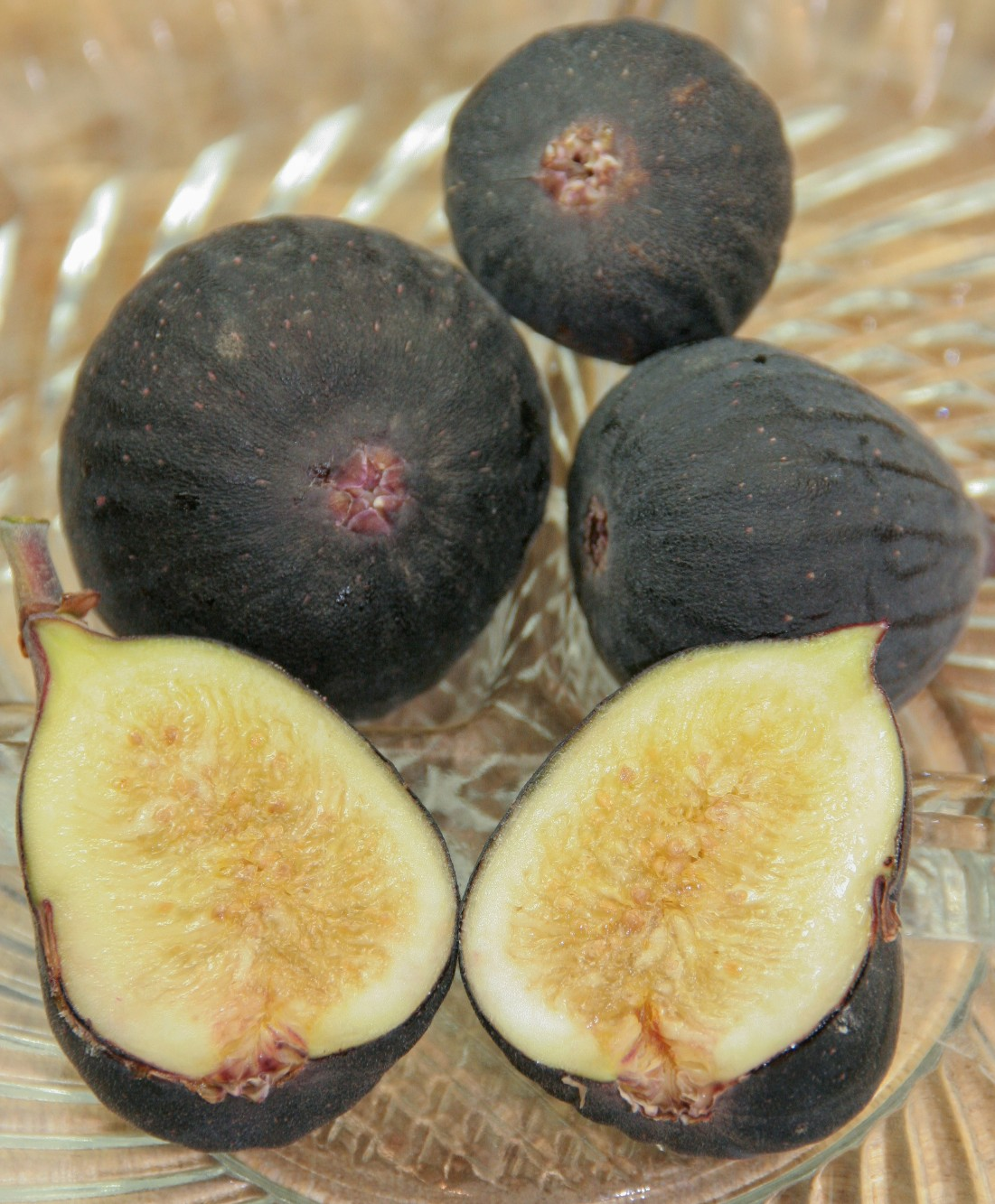 Ficus carica 'Black Mission'