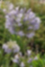 image-coming-soon_edited.jpg