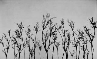Hampstead Heath Grasses