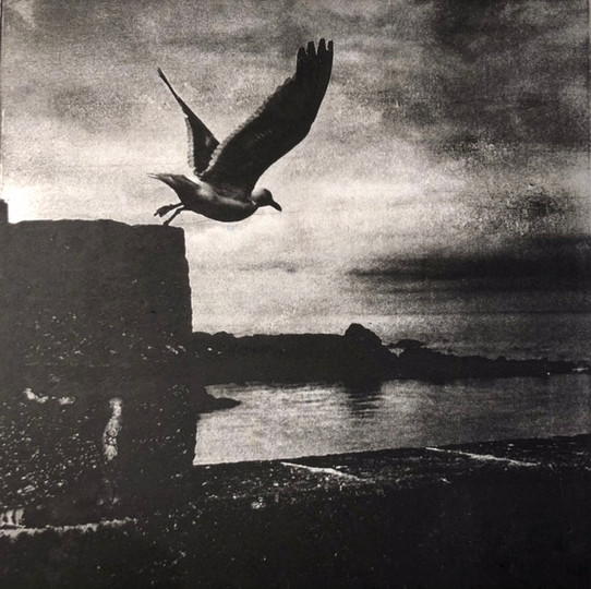 Seagull, St Ives