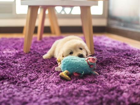 Os benefícios dos bichinhos de pelúcia para animais