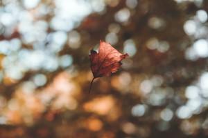 Az őszi napéjegyenlőség