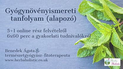 Online gyógynövényismeret wix cover.jpg