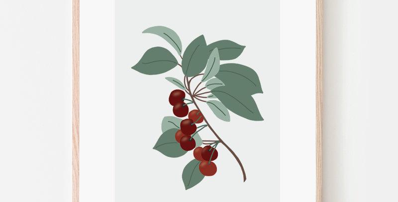 Affiche - Poster - Fruit de saison Cerises Cherries