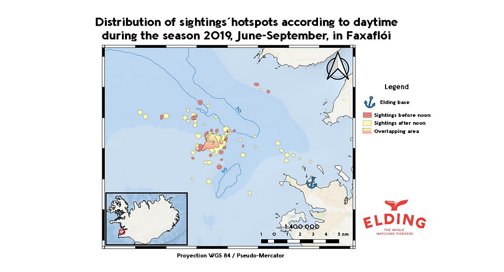 Map 1. Distribution of sightings' hotspots according to daytime during the season 2019 (June-September) in Faxaflói. Each hotspot represents an area in which 1 or more sightings of cetaceans have been recorded within a distance of 1000 m. to each other. In pink, it is represented the sightings before noon (<12 pm), and yellow for the sightings after noon (>12 pm). The gradient yellow-pink represents the merging areas between them. Data gathered with SpotterPro® and represented with QGIS.