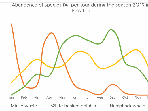 When is the best time of year to see whales?