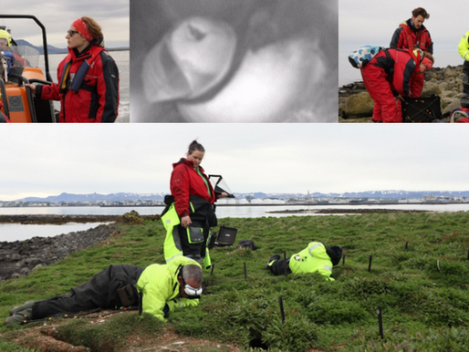 Puffin research expedition