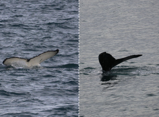 TWO NEW WHALES ADDED TO OUR WILDLIFE CATALOGUE