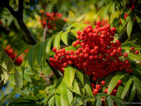 Sensommardag i Botaniska
