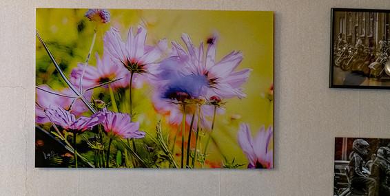 flowers_onwall.jpg