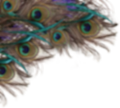 Peacock-Feather-PNG-File.png
