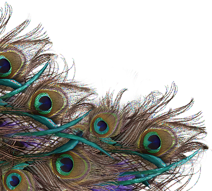 Peacock-Feather-PNG-File_edited_edited.p
